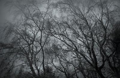 Gray misty morning