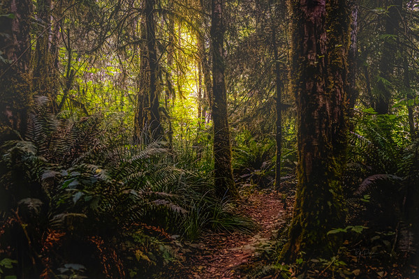 Deep Forest Dreams