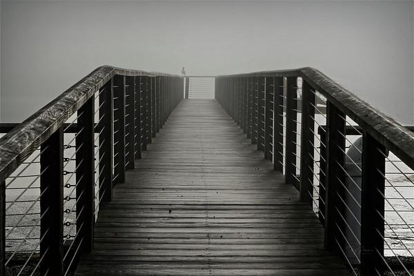 Foggy Lines  on the Oregon Coast