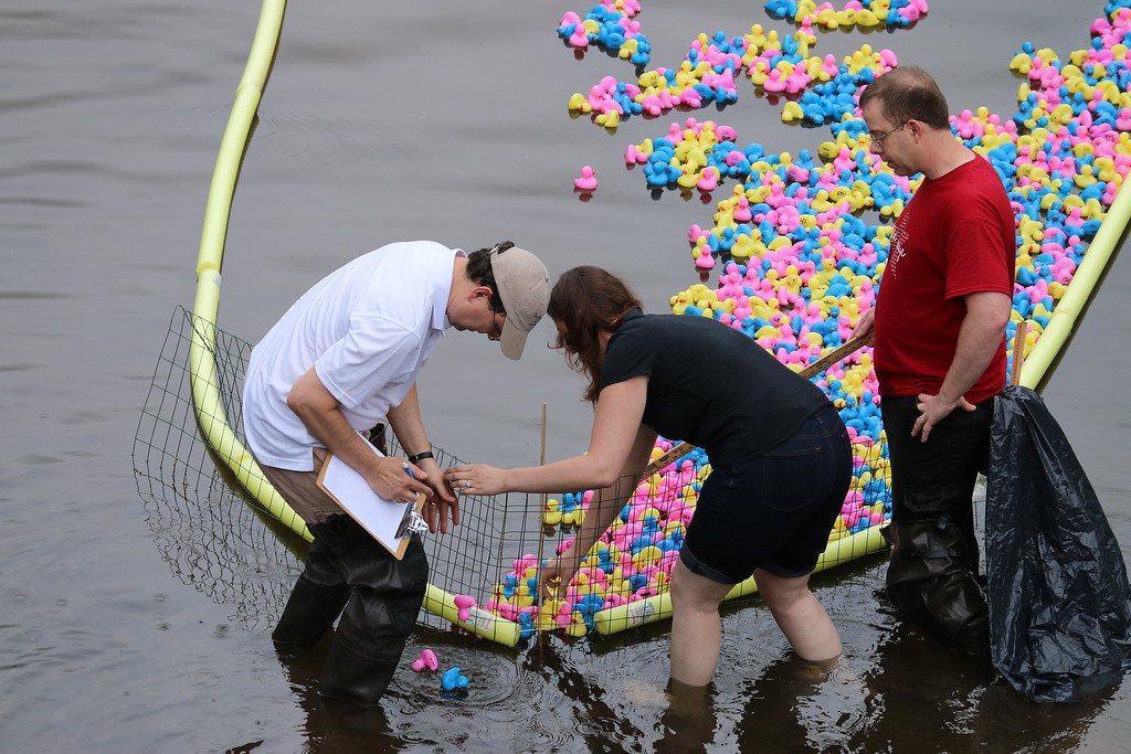 . On Sat., May 9, 2015, Collegeville residents and their families gathered at the Perkiomen Bridge Hotel to cheer on their rubber ducks as they raced down the Perkiomen Creek. Photos for The Times Herald by Alexis Primavera..