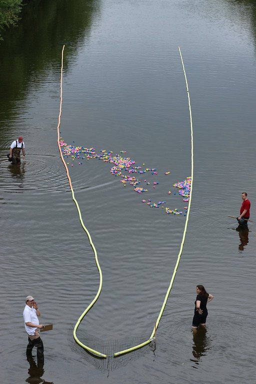 . Hundreds of rubber ducks slowly make their way toward the finish line as Collegeville residents watch from above on the Perkiomen Bridge Saturday, May 9, 2015. Photos for The Times Herald by Alexis Primavera.