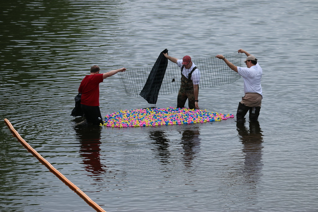 . The crowd cheers as hundreds of rubber ducks are  released into the Perkiomen Creek and the race begins Saturday, May 9, 2015.  Photos for The Times Herald by Alexis Primavera.