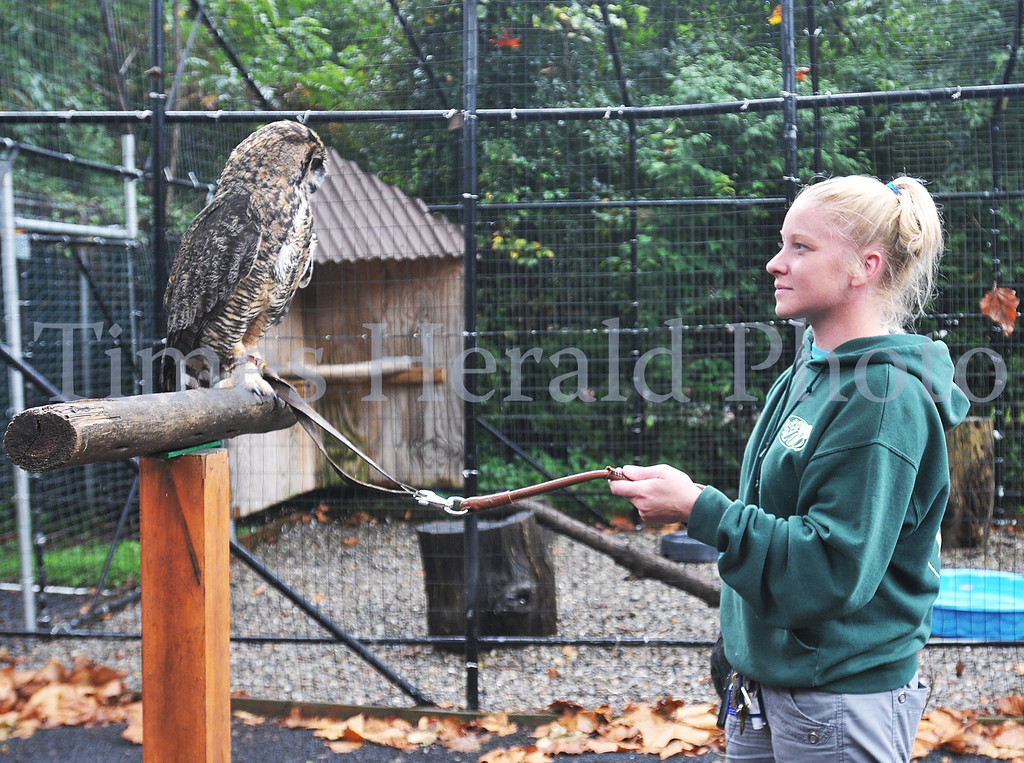 . Stella the new mascot for the Temple Owls looks over at Zoo Educator Elizabeth Yerger at the Elmwood Park Zoo.  Wednesday, August 28, 2013.  Photo by Adrianna Hoff/Times Herald Staff.