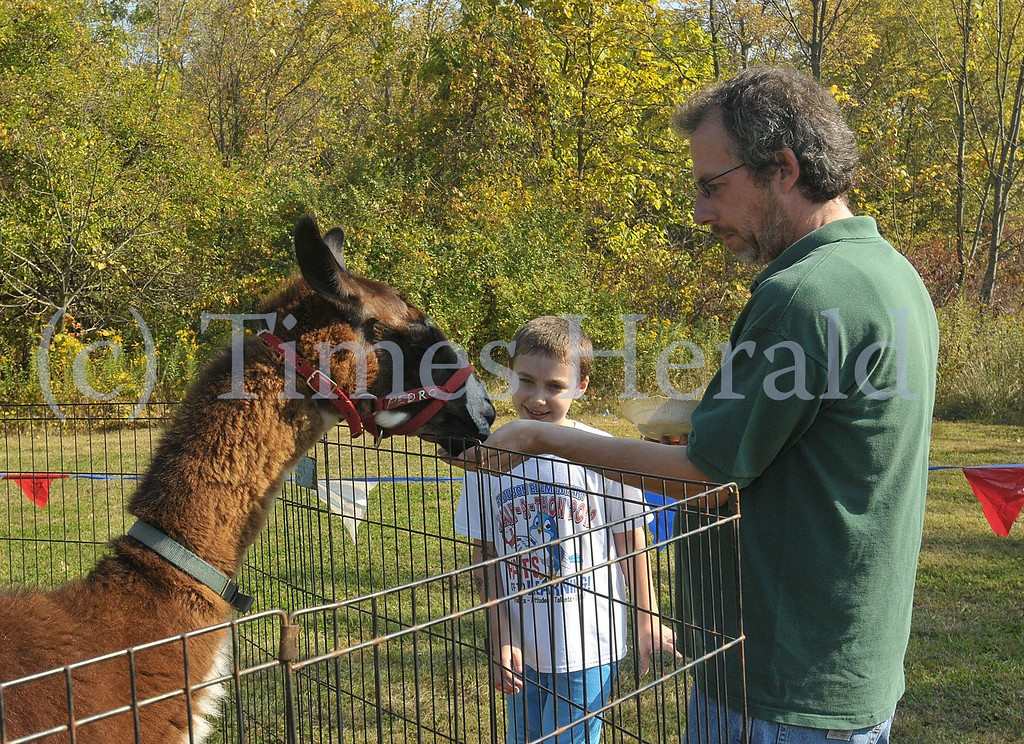 . Joe and Alex Stever feed Pedro the Llama at the petting zoo of the Lower Providence Fall Festival.  Saturday, October 5, 2013.  Photo by Adrianna Hoff/Times Herald Staff.