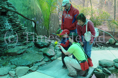 Elmwood Park Zoo in Norristown is allowing visitors to have a sneak peek at it's new Bird of Paradise exhibit. Photo by Gene Walsh / Times Herald Staff