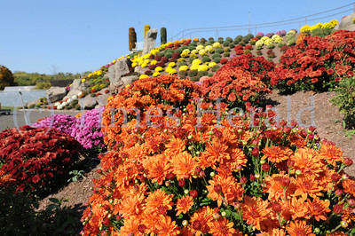 Mums at Ott's Exotic Plants in Perkiomen