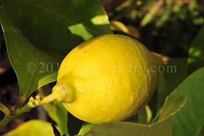 Orchard Fruits le Chene Billot DSC_4001
