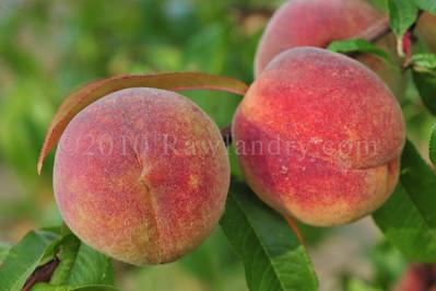 Orchard Fruits le Chene Billot DSC_3751