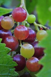 Orchard Fruits le Chene Billot DSC_3702