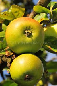 Orchard Fruits le Chene Billot DSC_3727