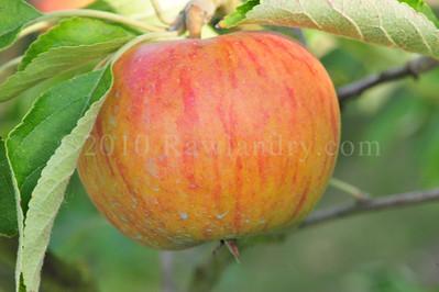 Orchard Fruits le Chene Billot DSC_3829