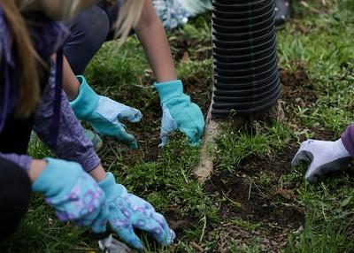 Ridge Park cleanup