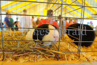 Montgomery County 4H Fair held in Creamery Pa.