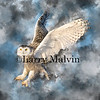 Snowy Owl Lift-off with Smoky Background