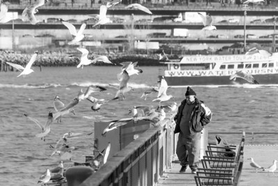 Birdman and Seagulls