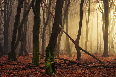Just a forest scene