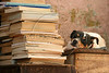 "A dog keeps guard next to books at the Tobias Barreto Community Library in Rio de Janeiro, Brazil. Founded in 1998 in his own home by day laborer Evando dos Santo, the library has some 40,000 volumes and will soon move into a new building nearby designed by Brazilian Architect Oscar Niemeyer. (Australfoto/Douglas Engle)<br /> <br /> Un perros guarda a los libros de la biblioteca comunitaria ""Tobias Barreto"" en Rio de Janeiro, Brazil. Fundada en 1998 en su propria casa por el obrero Evando dos Santos, la biblioteca contiene alrededor de 40 mil volumenes y mudaria para un edificio disenado por el arquitecto Brasileno Oscar Niemeyer. (Australfoto/Douglas Engle)"