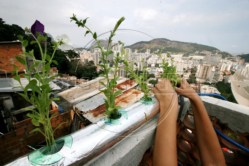 Temple student Elissa Ranck installs plants in a hydoponic grower in the Santa Marta slum in Rio de Janeiro, August 19, 2005.  Using hydroponics, a little hard labor and lots of ingenuity, Temple University students spend their vacation time building and installing a farming apparatus that turns the walls and roofs of slum residents into small gardens. The technology, part of a broader environmental movement known as green roofing, helps residents compensate for land shortages by supporting miniature plant nurseries from their homes. Green roofing is popular in Europe for its environmental and aesthetic benefits, but this is an initial attempt to show that the technology can also provide sustenance for the poor.(Australfoto/Douglas Engle)(Australfoto/Douglas Engle)(Australfoto/Douglas Engle)