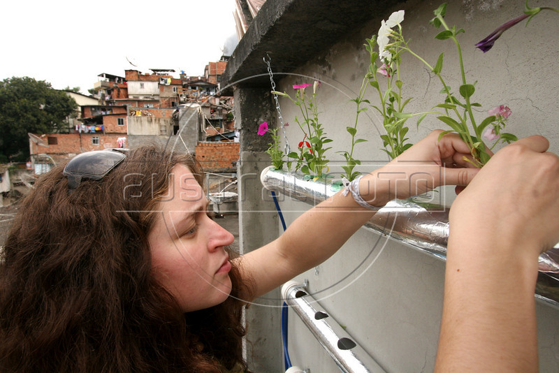 Temple student Lauren Bolinger installs plants in a hydoponic grower in the Santa Marta slum in Rio de Janeiro, August 19, 2005. Using hydroponics, a little hard labor and lots of ingenuity, the Temple University students spend their vacation time building and installing a farming apparatus that turns the walls and roofs of slum residents into small gardens. The technology, part of a broader environmental movement known as green roofing, helps residents compensate for land shortages by supporting miniature plant nurseries from their homes. Green roofing is popular in Europe for its environmental and aesthetic benefits, but this is an initial attempt to show that the technology can also provide sustenance for the poor. (Australfoto/Douglas Engle)(Australfoto/Douglas Engle)(Australfoto/Douglas Engle)
