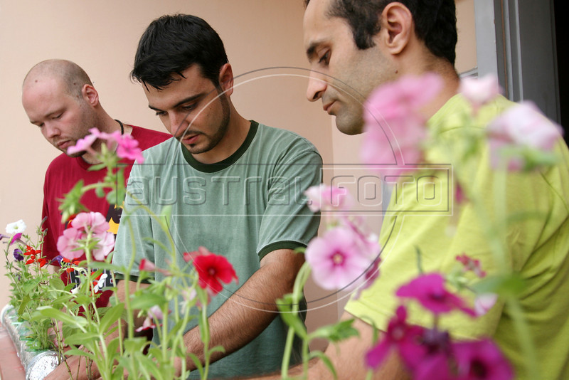 Temple students Joe Lulis, left, Josh Meyer, center, and Brazilian Agronomist Luiz Dias da Mota, right, install plants in a hydroponic grower in the Santa Marta slum in Rio de Janeirio, August 19, 2005. Using hydroponics, a little hard labor and lots of ingenuity, the Temple University students spend their vacation time building and installing a farming apparatus that turns the walls and roofs of slum residents into small gardens. The technology, part of a broader environmental movement known as green roofing, helps residents compensate for land shortages by supporting miniature plant nurseries from their homes. Green roofing is popular in Europe for its environmental and aesthetic benefits, but this is an initial attempt to show that the technology can also provide sustenance for the poor. (Australfoto/Douglas Engle)(Australfoto/Douglas Engle)(Australfoto/Douglas Engle)