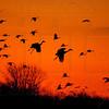 """Sunset Cranes"""