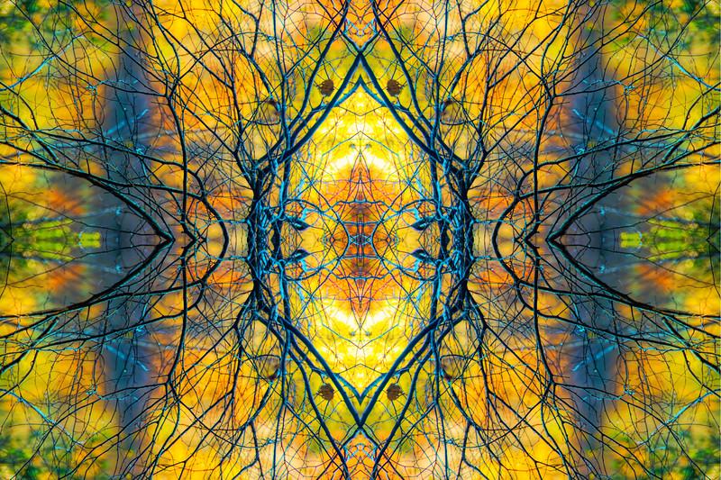 Mystic Sunlit Branches