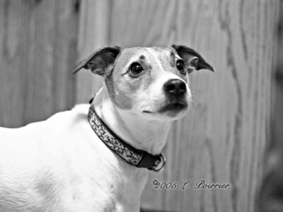 2005-12-10  Pet Shoot in Black White