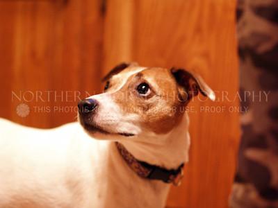 2005-12-10 Pet Photo Shoot