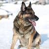 FAIRBANKS DOG PARK FUNDRAISER