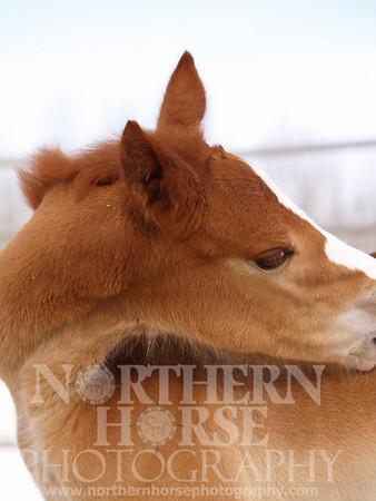 2006 - Seekins Ranch - Lovie and Baby