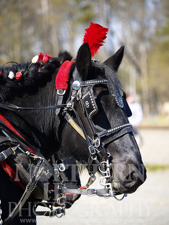 2006 - Horse Drawn Carriage
