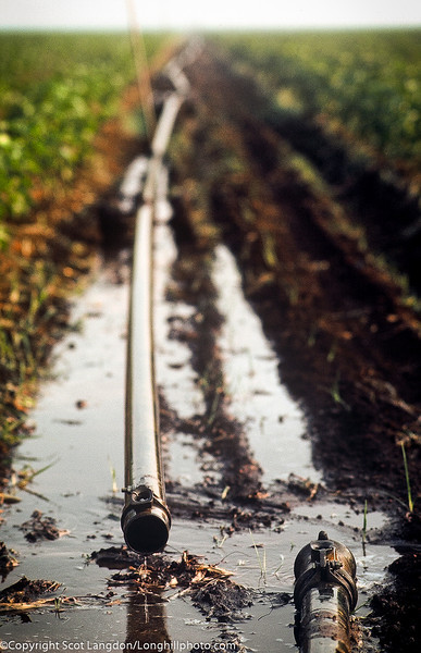 Irrigation repairs in the cotton fields.
