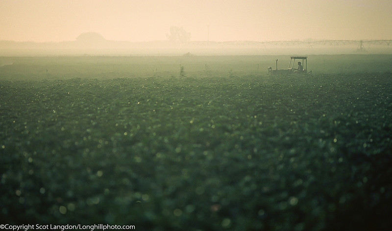 By 5:00am, the Kibbutz Malkiya residents who farm the land in Israel, are up and working the fields.  Here, the cotton fields are being irrigated.