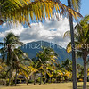 Beautiful Mt. Nevis as seen through the trees  on the Avenue of Palms at Nisbet Plantation.  Peaking through on the right is The Great House.