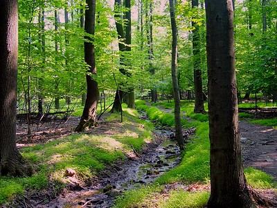 A trail in the South Orange Reservation