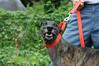 Dog's Track Name: Kiowa Wish Jack  (we just call him Jack)
