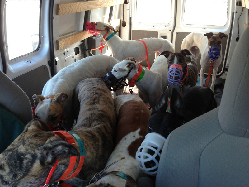 8 Dogs, all loaded up.   On The Road Again....