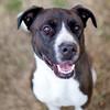 Rocky was rescued by Best Friends Animal Society!  la.bestfriends.org/