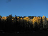 Sun hitting the tops of the aspens.