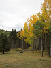 Another view of the gorgeous aspens.