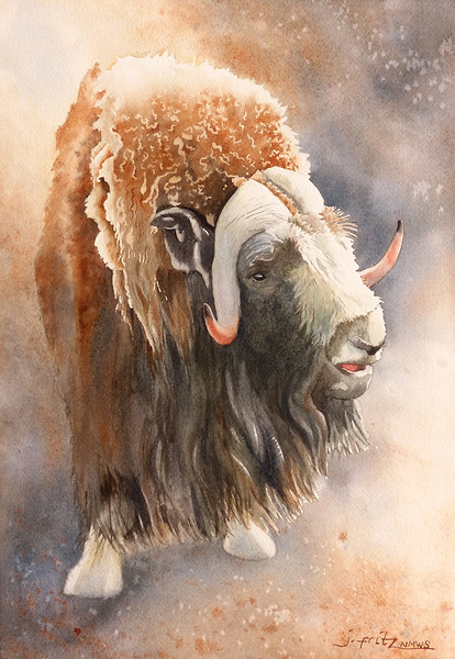"""Honorable Mention: Fritz, Jane """"Wild and Wooly Muskox"""""""