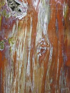 Zuhl Museum closeup of petrified wood - SC - 2018-01-16