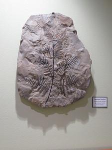 Tree Fern - Zuhl Museum NMSU 2018-01-16