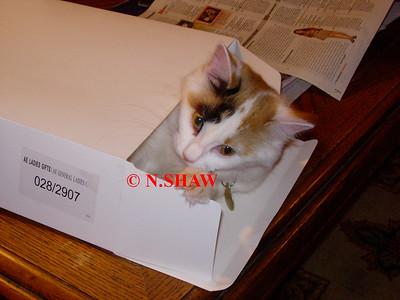 TORTOISESHELL CAT 0028