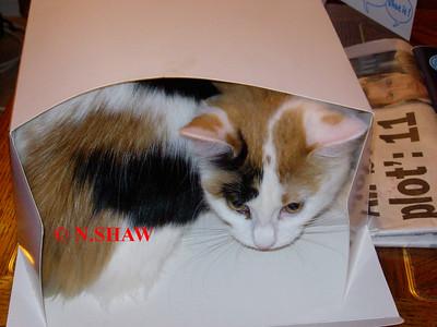 TORTOISESHELL CAT 0029