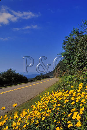 NC BRP CRAGGY GARDENS SUNFLOWERS PARKWAY 4W