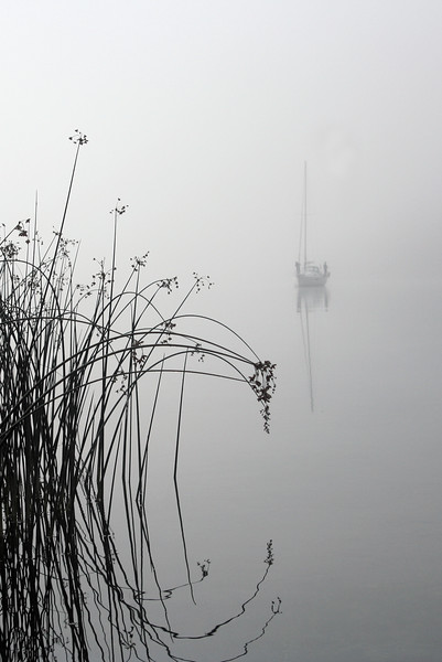 Foggy Morning, South Benjamin Island