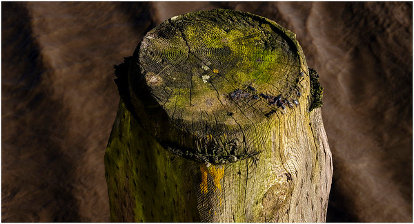AN OLD JETTY POST  ELSWICK RIVERSIDE