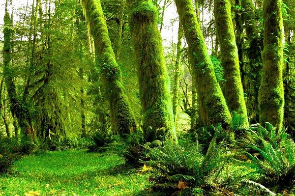 HOH RAIN FOREST WASHINGTON