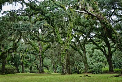 BUTLER GREENWOOD PLANTATION - LOUISIANA